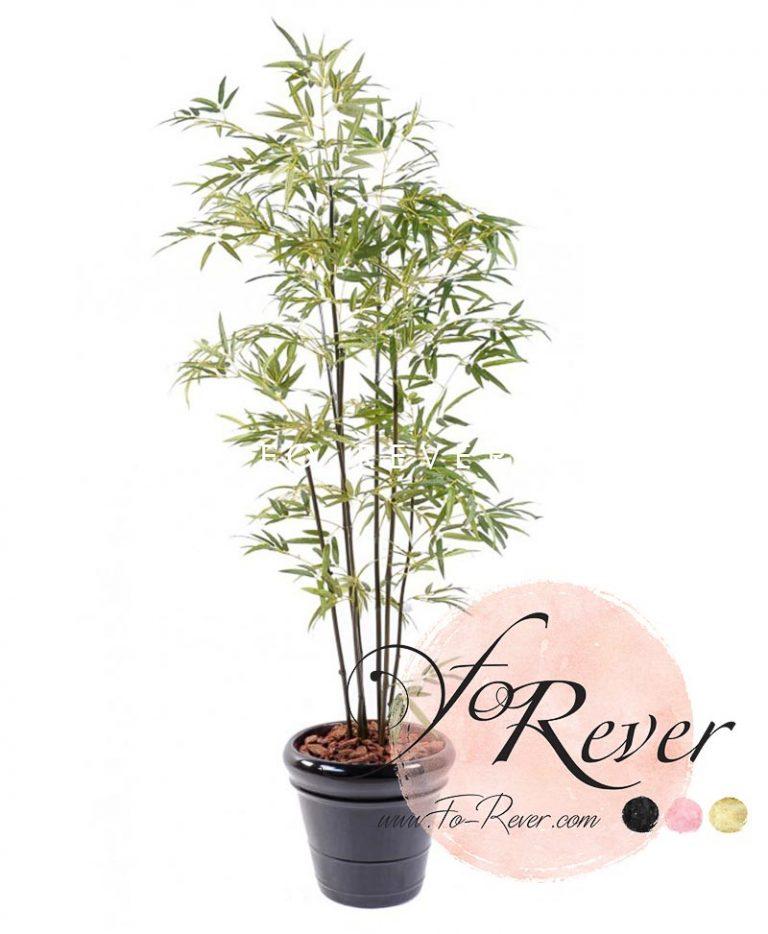 Bambou Vert 240 et 290cm